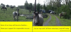 Rocky & friends promoting responsible rescue practise