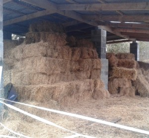 Hay delivery 25th January 2015