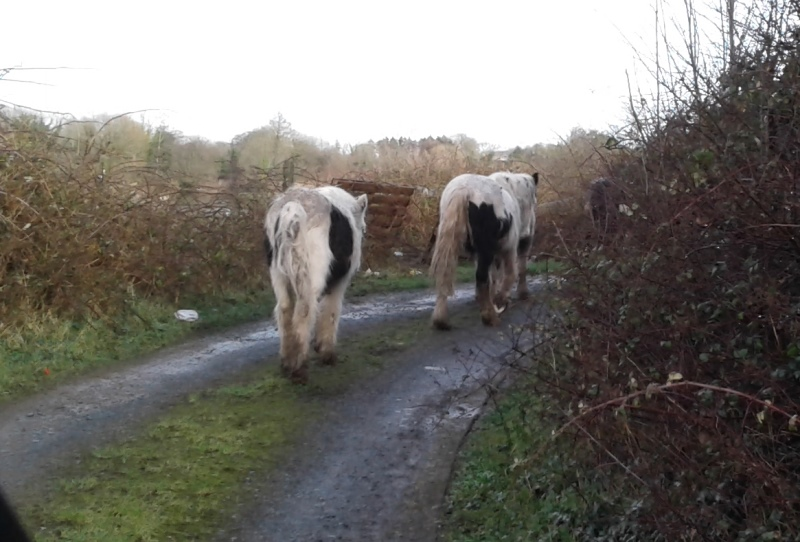The Equine Crisis Continues