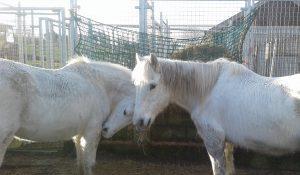 Milly & Frankie 28-12-16