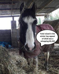 total raised in hay appeal